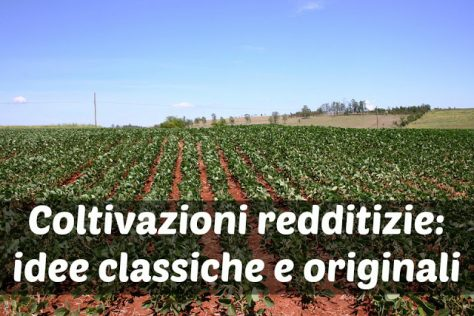 Coltivazioni Redditizie: idee per Investire in Agricoltura