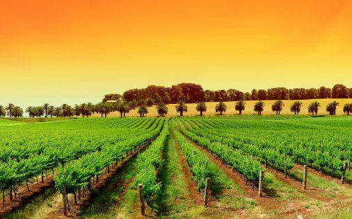 Azienda vinicola: guida completa