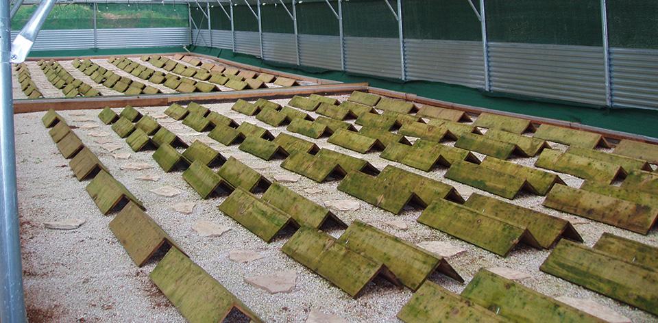 business plan per allevamento lumache